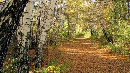Interior Hiking Trails